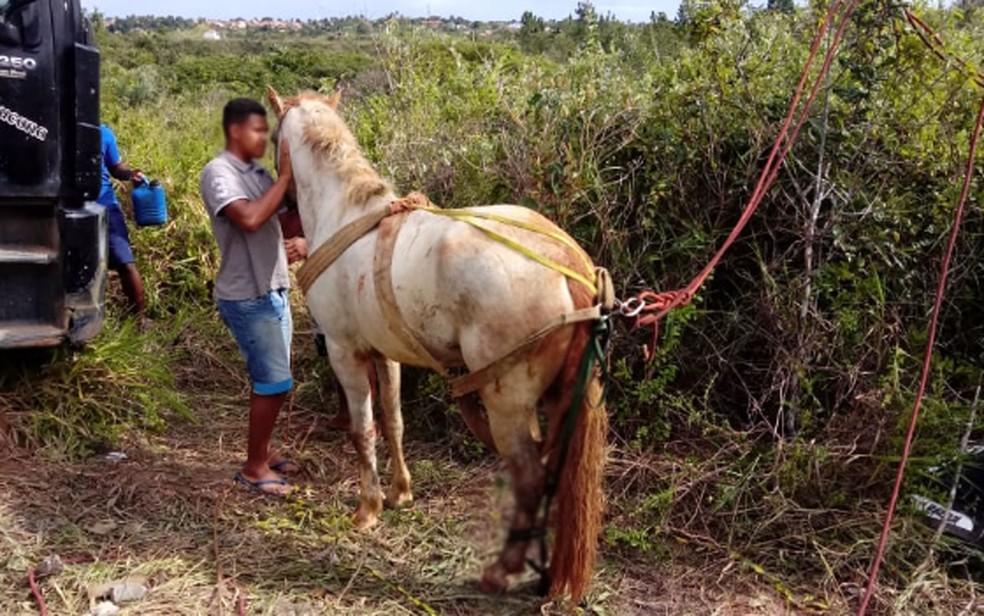 Homem e cavalo caem em poço com cerca de 20 metros e são resgatados pelo Corpo de Bombeiros 24