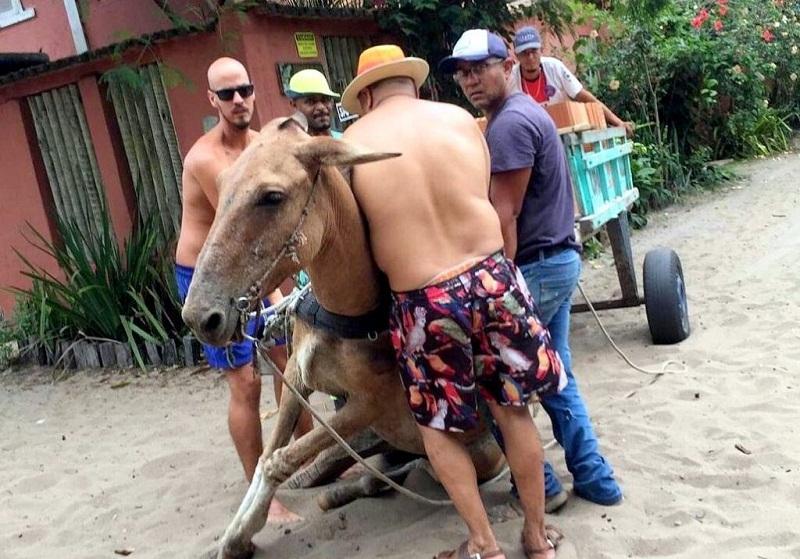 Moradora denuncia maus-tratos, após cavalo não suportar peso de carroça; animal foi resgatado